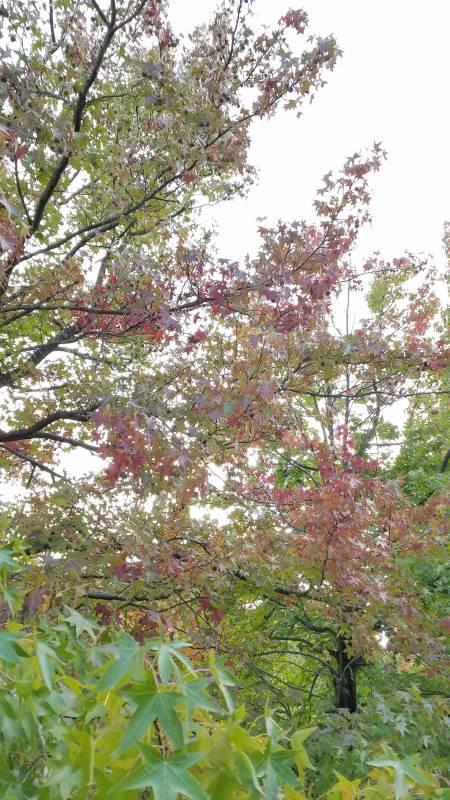 秋ですね(*´艸`)