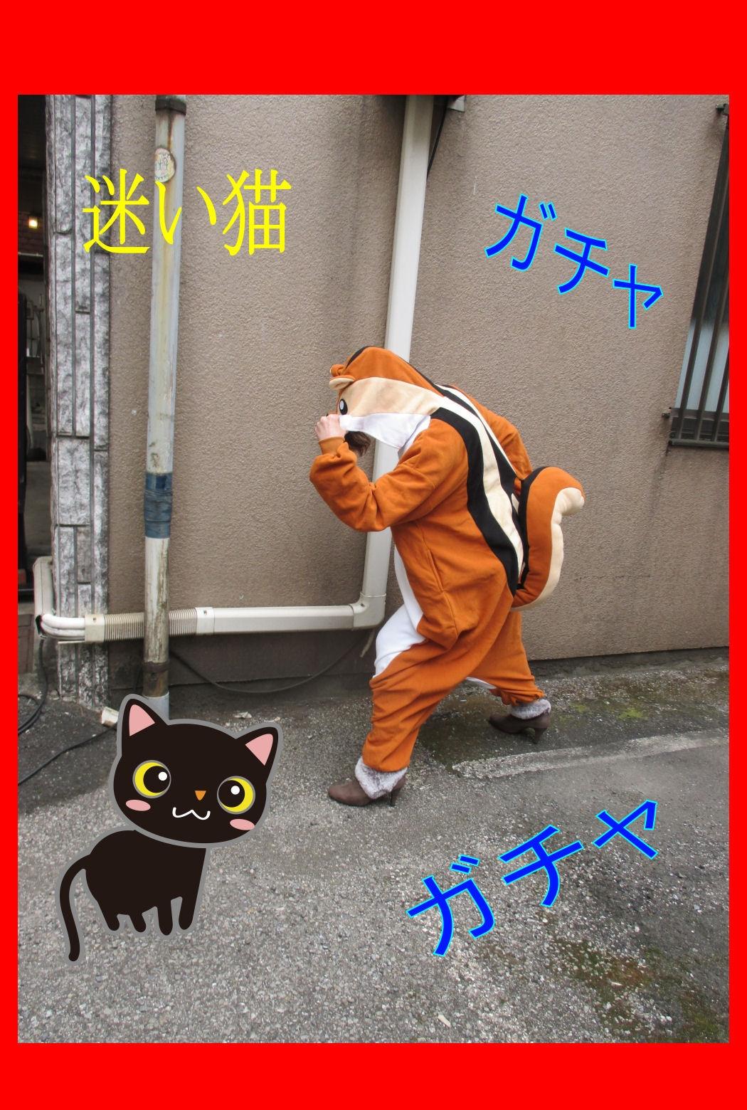 【三毛猫】りーちゃん