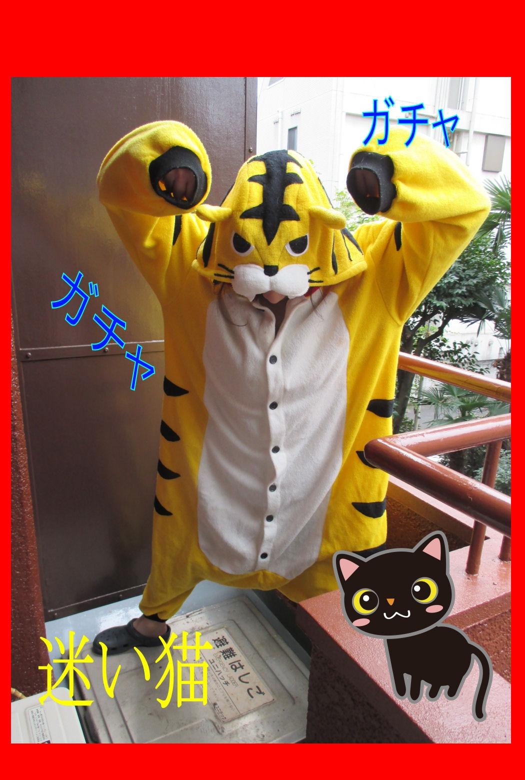 【三毛猫】とーちゃん